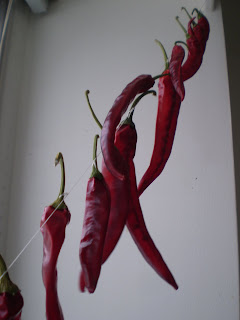 Hot red peppers from the Strathcona Farmers' Market drying in our kitchen
