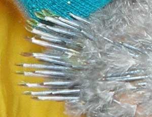 Η σωστή συντήρηση των φτερωτών  προς ταρίχευση θηραμάτων