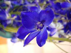 Je vous partage mes plus belles photos de fleurs... Testez vos connaissances !