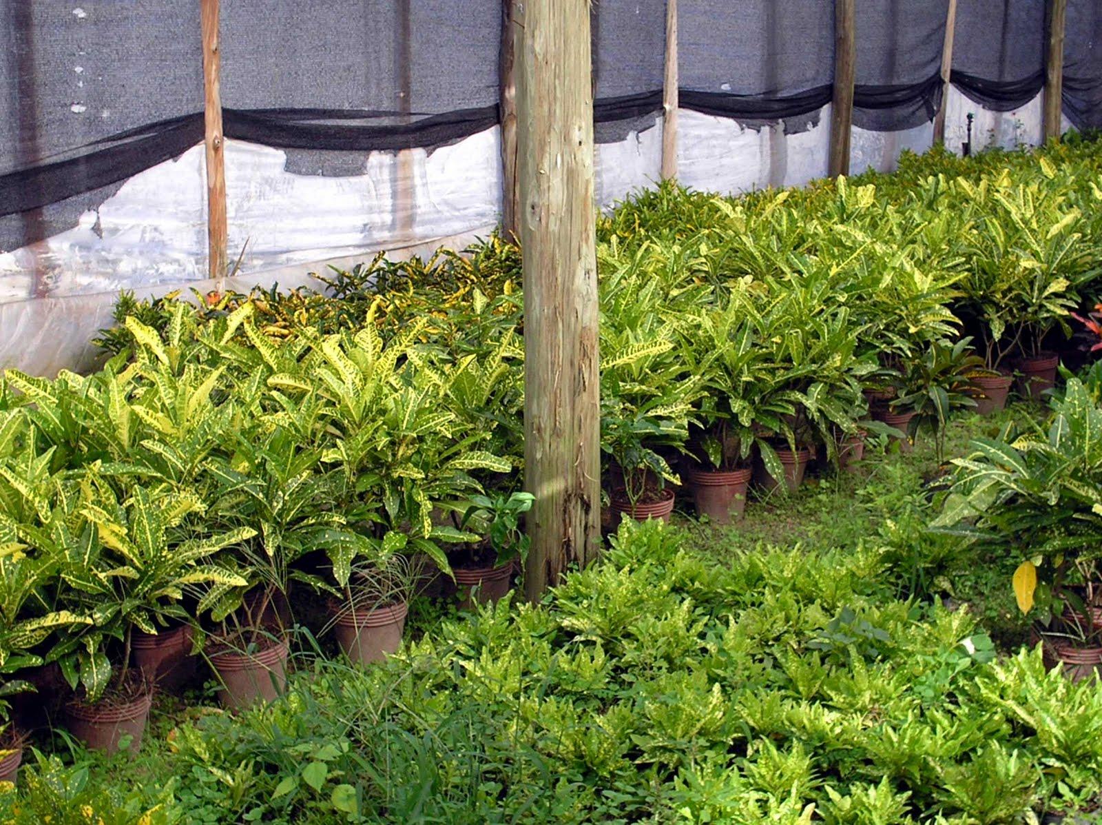 Asociaci n correntina de productores de flores de corte y for Que es un vivero de plantas ornamentales