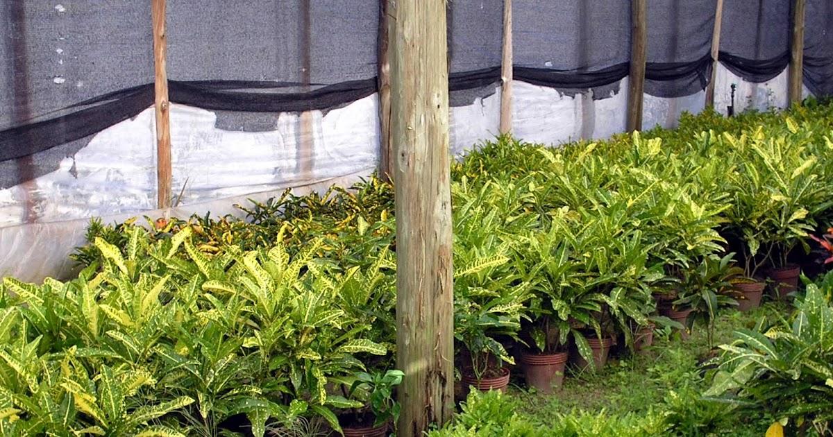 Asociaci n correntina de productores de flores de corte y for Produccion de plantas ornamentales