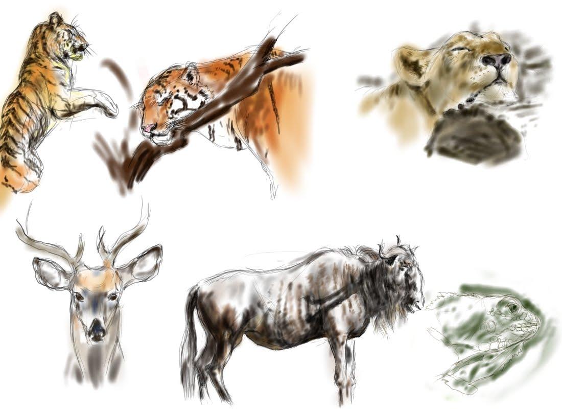 [Animal+sketch]
