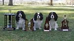 www. caninebodyworks.com