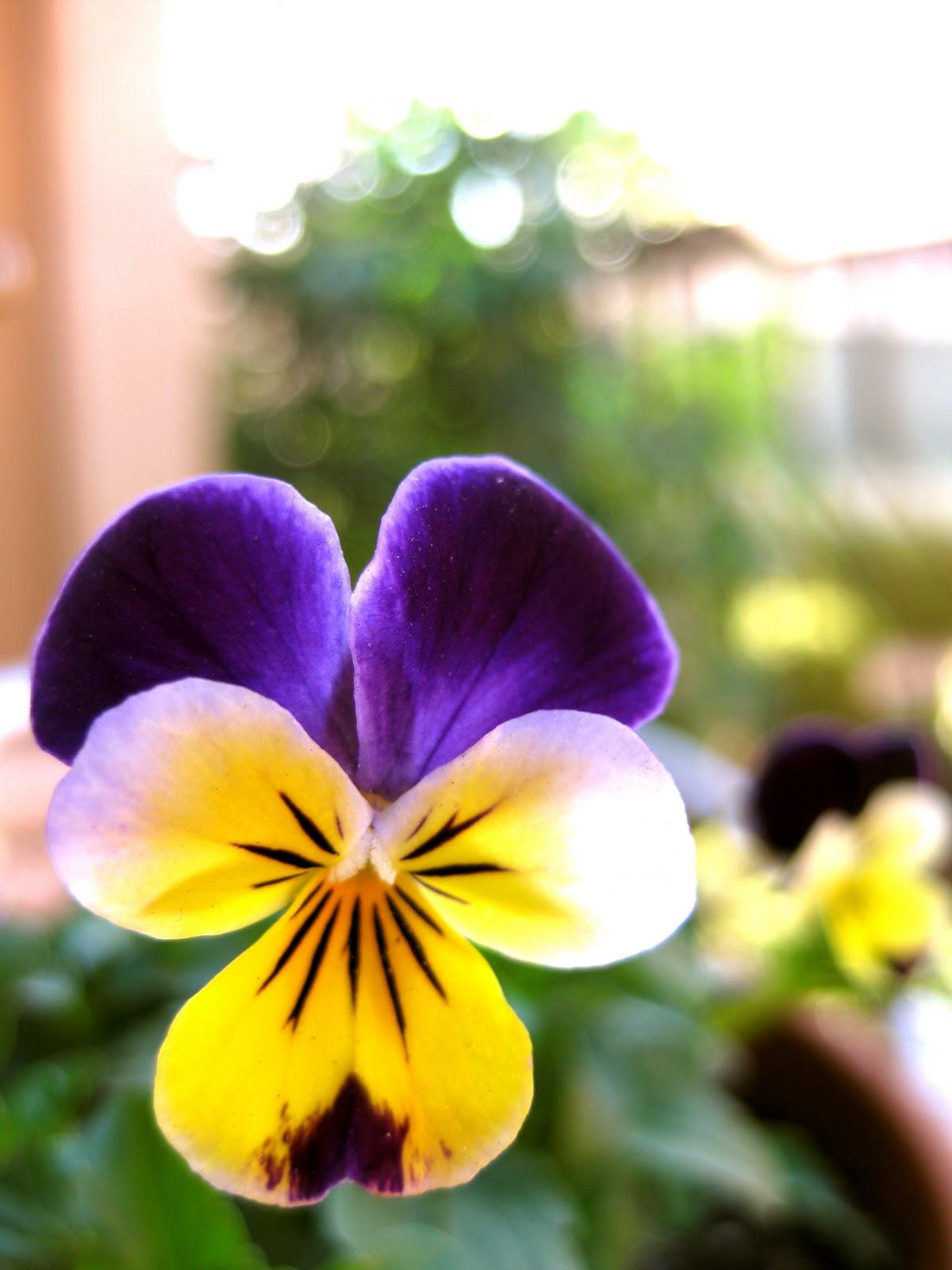 the prettiest thistles Winter Garden