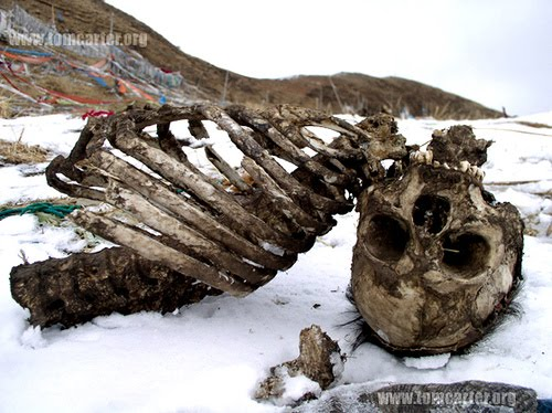tibetan sky burials Tibetan buddhist sky burials sky burials: an overview sky burials are a funerary practice in chinese provinces such as tibet and mongolia, where the majority of.