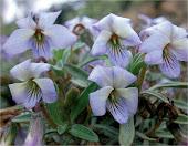 Las otras especies Flora