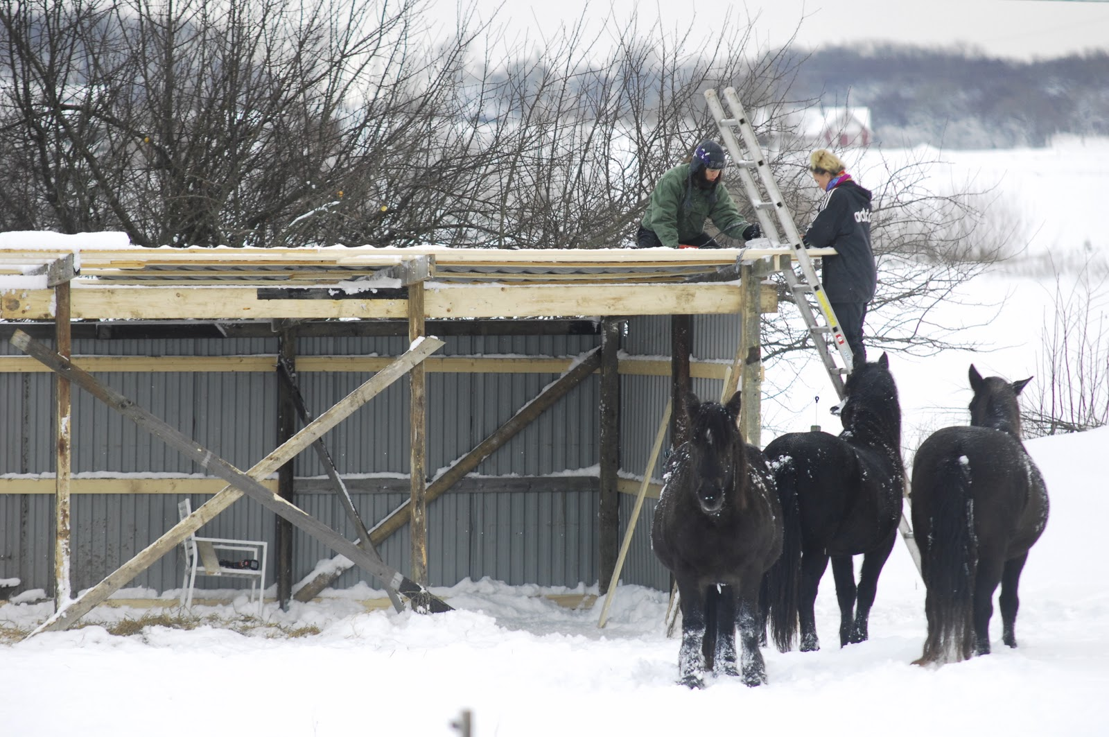 Vindskydd presenning häst