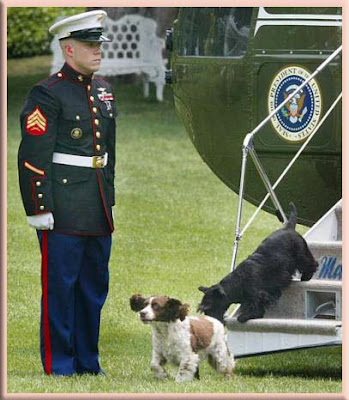 "President Bush with ""Scottish Terriers"""