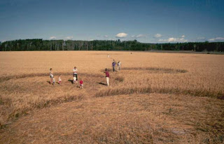 Crop circle di Vanderhoof, British Columbia Canada pictures image pics gallery