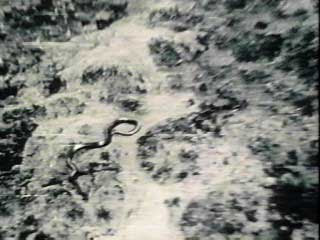 A Big Snake In The Congo pictures images photos pics gallery