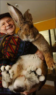Giant Rabbit pictures images photos pics gallery