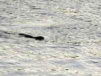 Great Lake Sea Monster