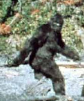 Sasquatch in Northern British Columbia, Canada pictures images pics photos gallery