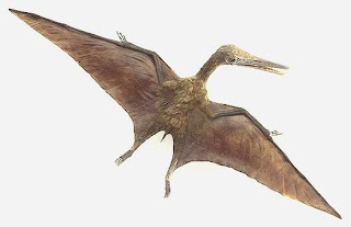 Pterosaurs in picture pic photo image gallery in nature phenomena picture
