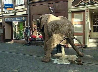 http://1.bp.blogspot.com/_sskxoBLm_pc/S2JXSEzgvKI/AAAAAAAAAeQ/Vj3chCOAUYA/s400/pissing_elephant%5B1%5D.jpg