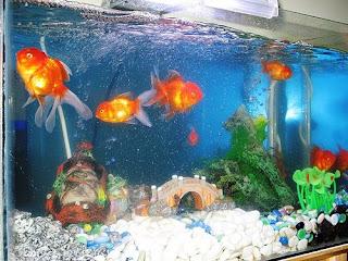 Feng Shui Wonders Feng Shui And Aquarium