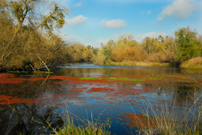 for Mokelumne river fishing