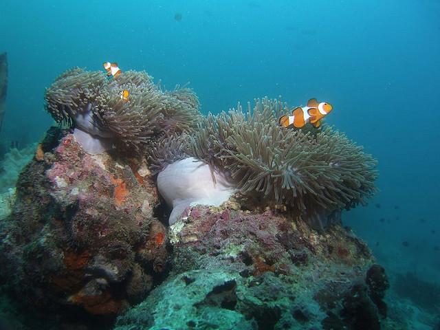 Pemandangan batu karang di dasar laut pulau redang