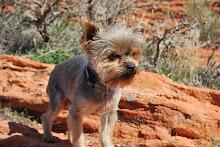 """Baylee's fav dog """"dash"""""""