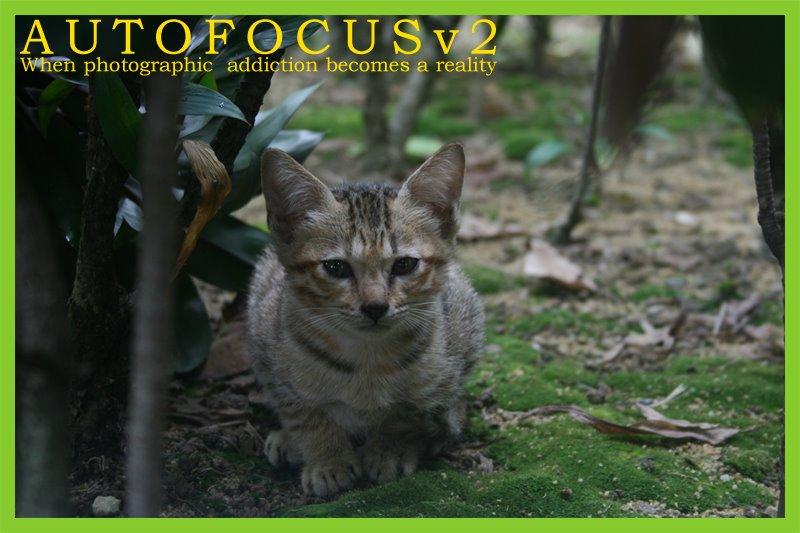 AUTOFOCUSv2