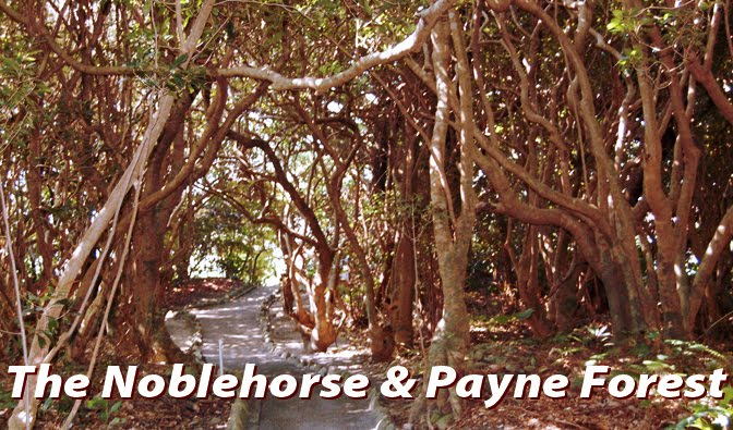 The Noblehorse &amp; Payne Forest