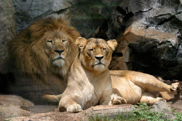 herbivore and carnivores animals