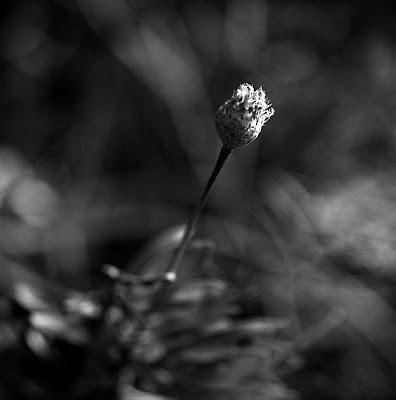 Una flor de tu almohada