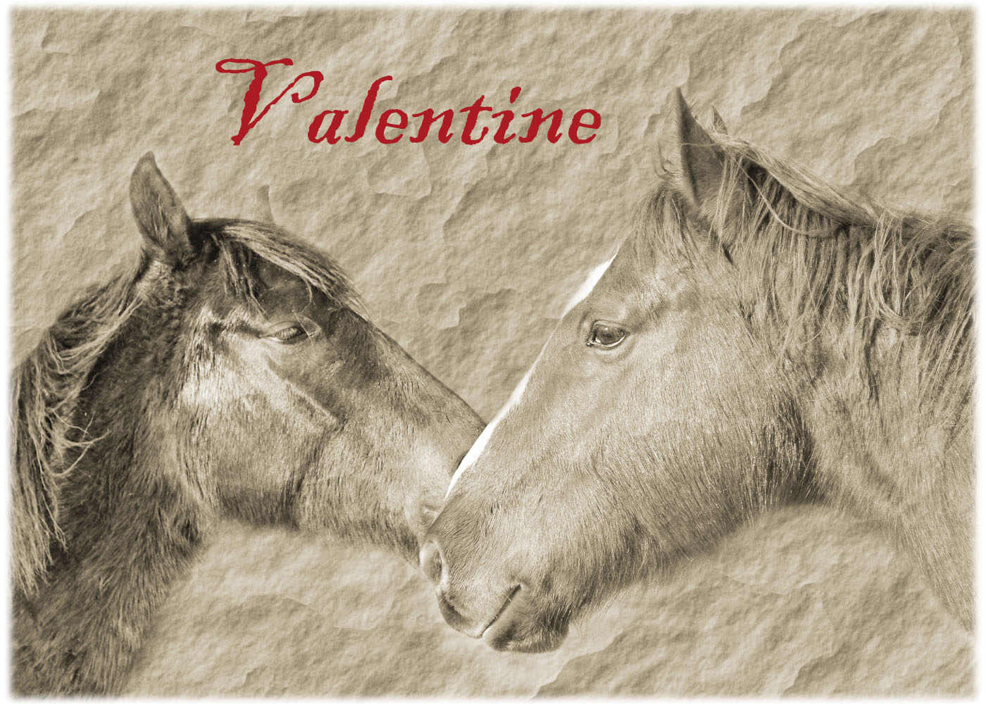 Our Rescued Horses On Valentineu0027s Day Cards