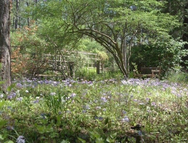 Triangle Tot Spots Unc Botanical Garden