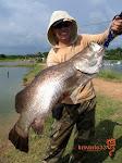 金目鲈纪录鱼