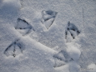 bird feet traces in snow