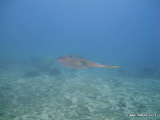 Squid reserve Cousteau