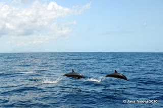 Dolphins Mayotte