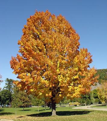 Tree at Devil's Lake State Park