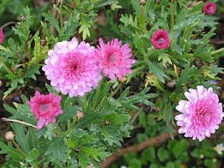 Todo infojardin jardinera flores plantas jardines share for Infos jardin
