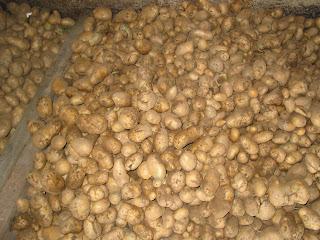 monton de patatas