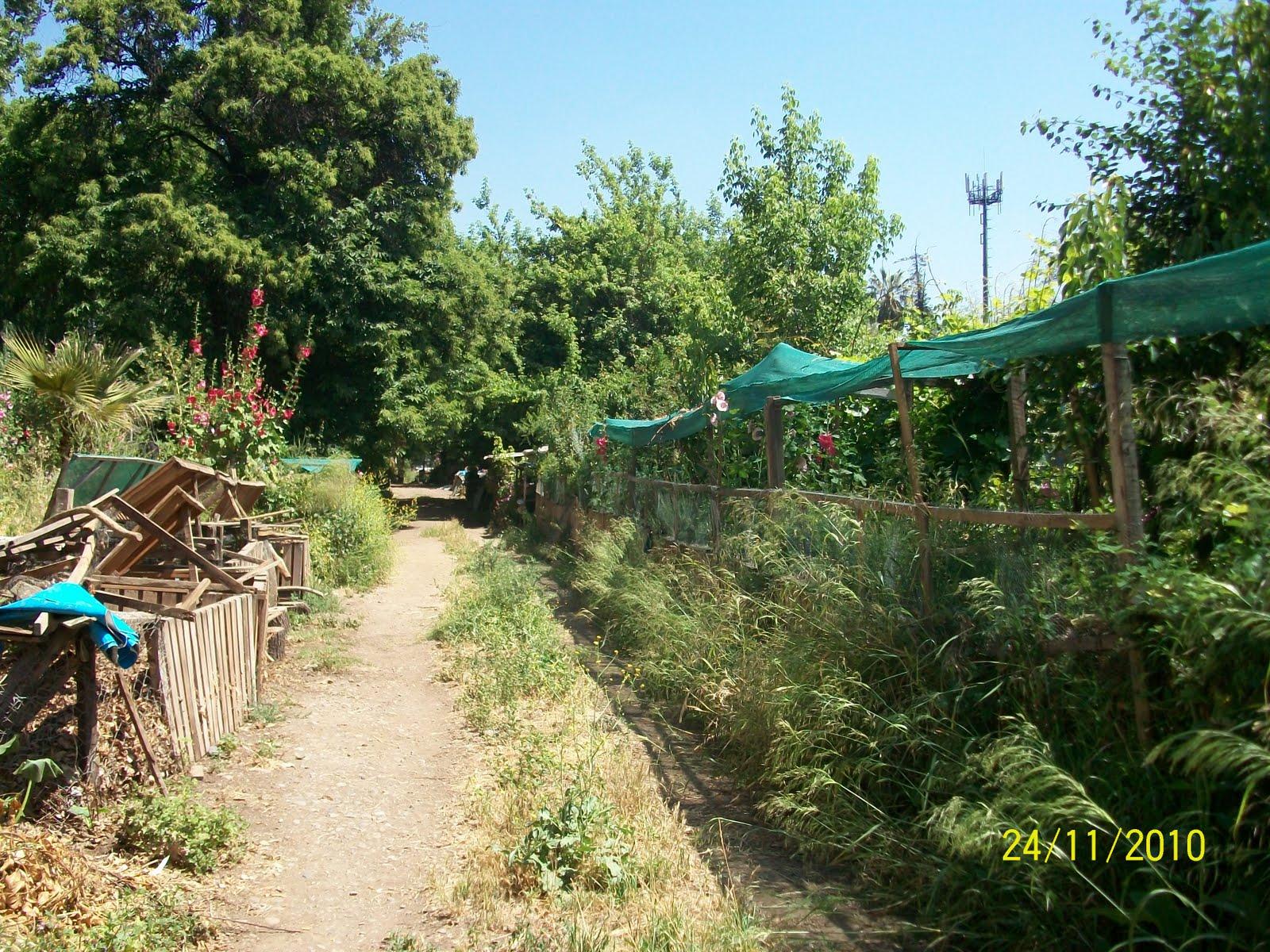 La huerta como expresi n cultural casera y urbana jard n for Huerto y jardin