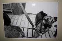 como perros