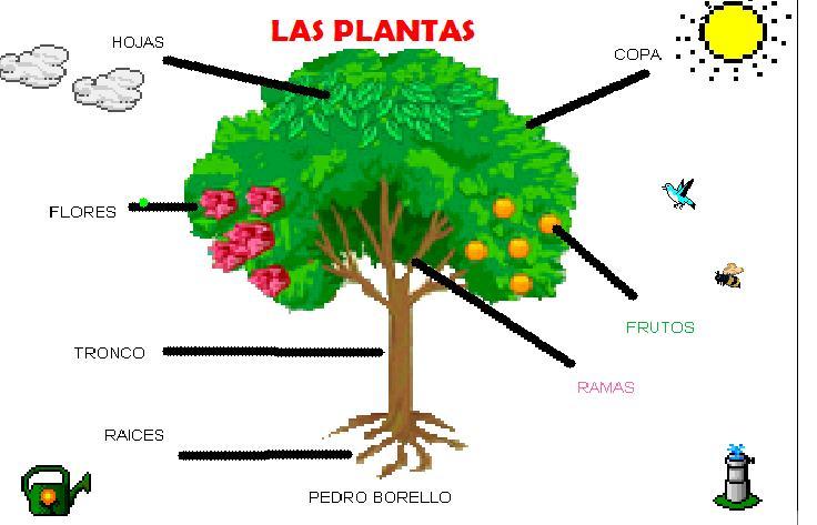 Dibujo de una planta con sus partes para colorear - Imagui