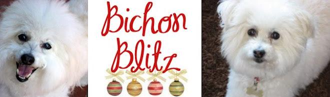 Bichon Blitz