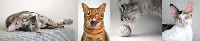 Bimsie-katterna