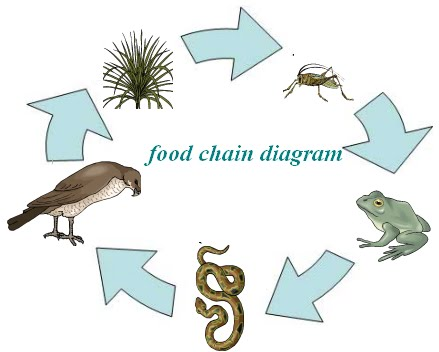 Gallery For gt Simple Food Web Diagram