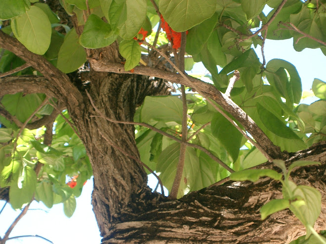 74 / Curacao (Netherlands Antilles)