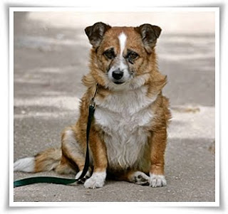 sitting dog The Dusun Comparative Adjectives