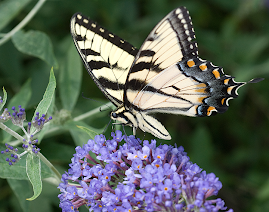 Other Pollinators