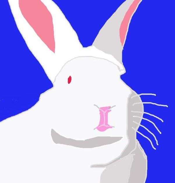 hilo living blog 2011 year of the rabbit. Black Bedroom Furniture Sets. Home Design Ideas
