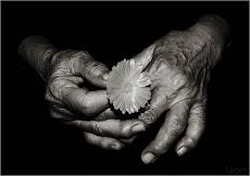As Mãos e a Flor