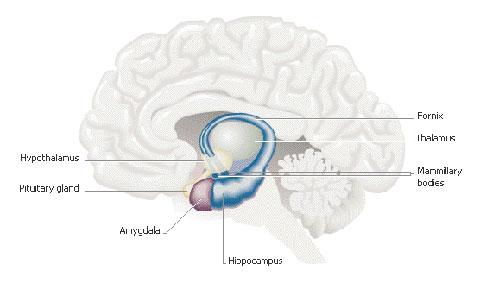 [human-brain.jpg]