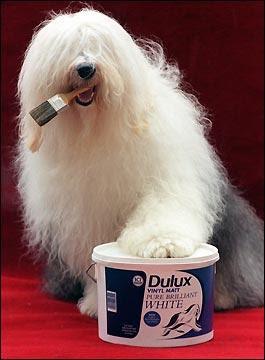 http://1.bp.blogspot.com/_tM3UyYWA0Tg/Sa14x6uijqI/AAAAAAAAAIM/uoNcixvA7BM/s400/dulux+dog.JPG