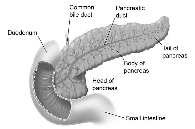 ... evidence against the tired pancreas theory this tired pancreas